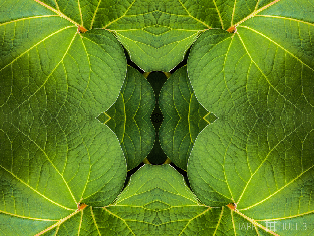 Leaf layers (Mandala-HH3_120920_0755-Edit)