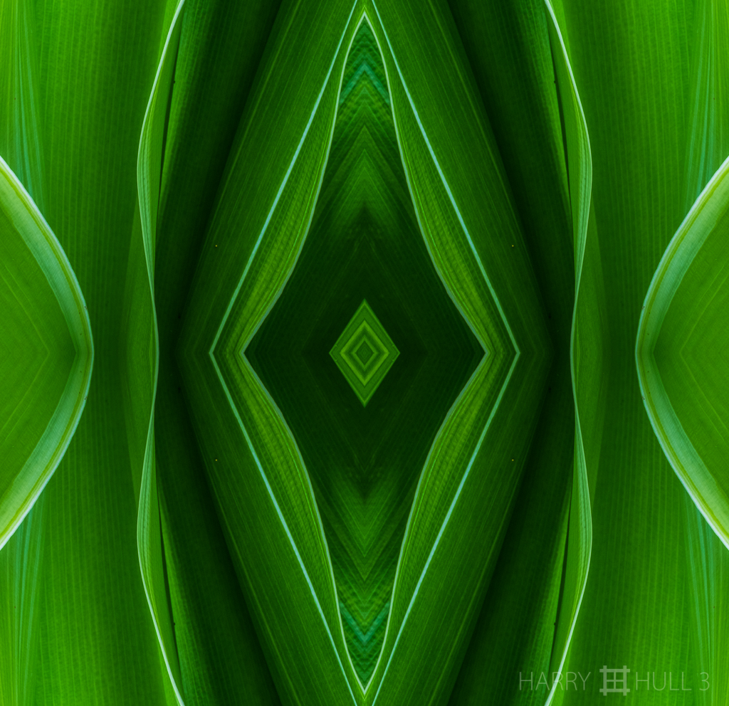 Green mystery (Mandala-HH3_160830_0177F-Edit)