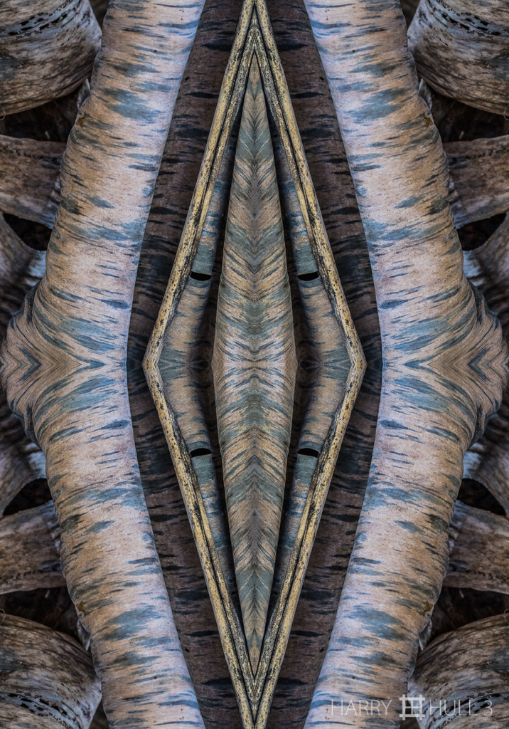 Folding fronds (mandala-hh3_161025_0560f-edit)