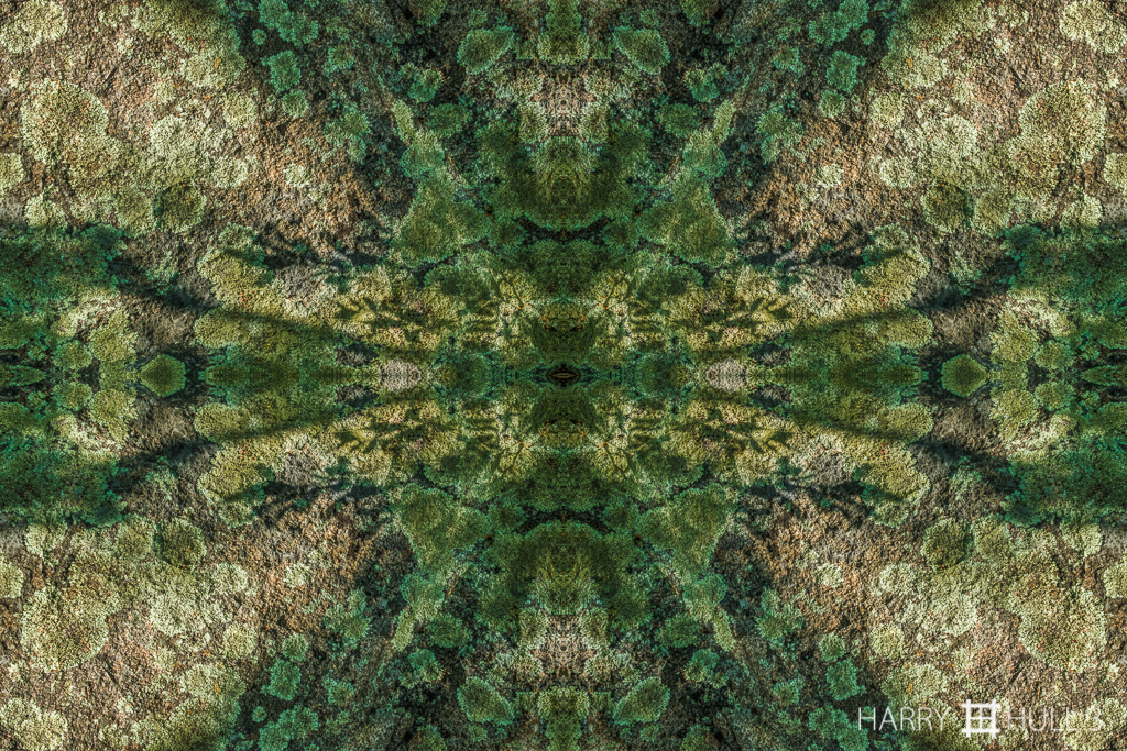 Forest rock (mandala-hh3_160917_0218f-edit)