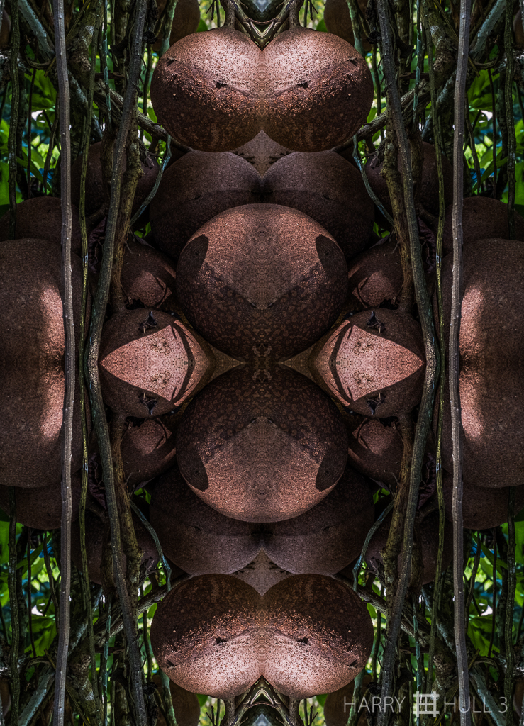 Forest effigy (mandala-hh3_161025_0554f-edit-3)