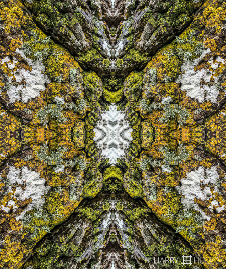 Lichen rock (mandala-hh3_150728_3014i-edit)