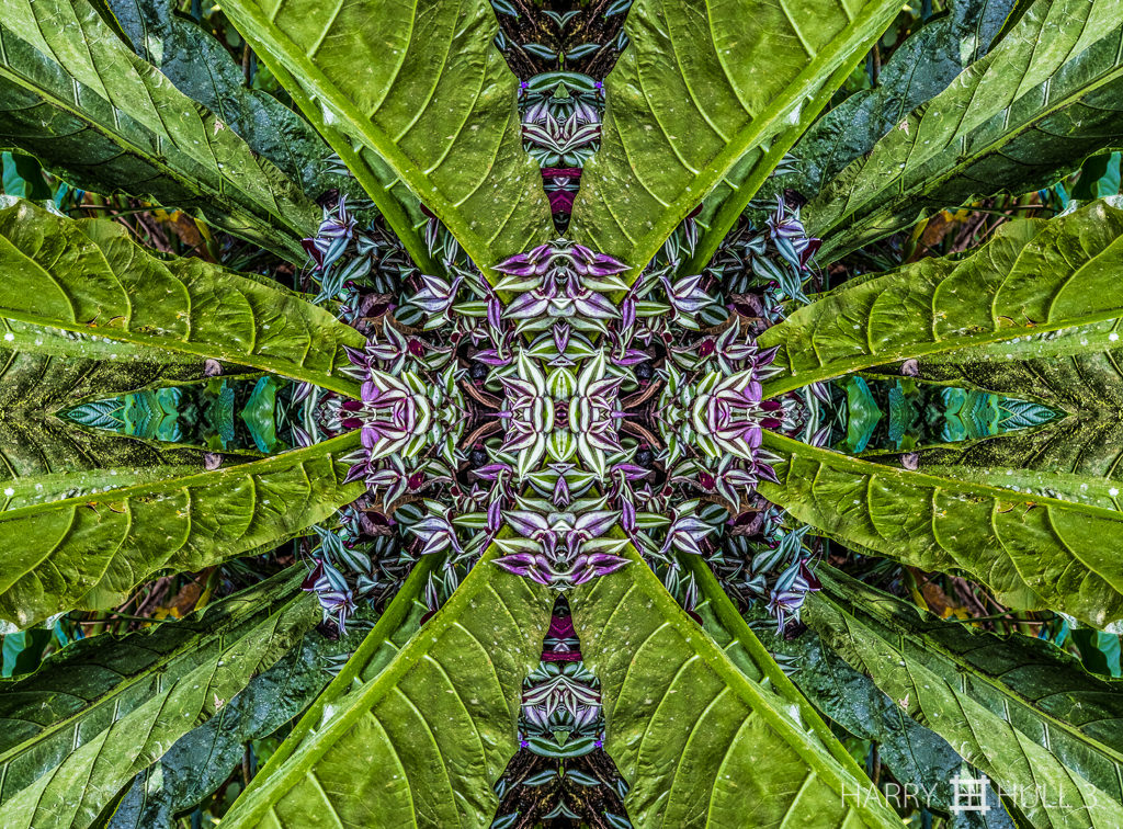 Leaf burst (mandala-hh3_161214_0838f-edit)