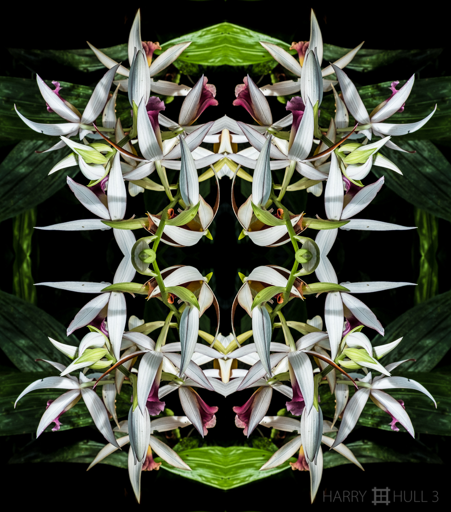 Orchids in a classical mode (mandala-hh3_161214_0847f-edit-2)