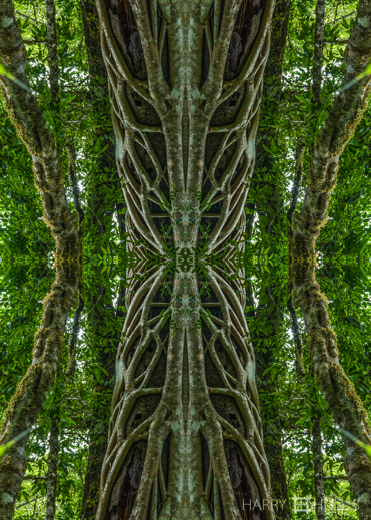 The root of the problem (mandala-hh3_070703_6202-edit)