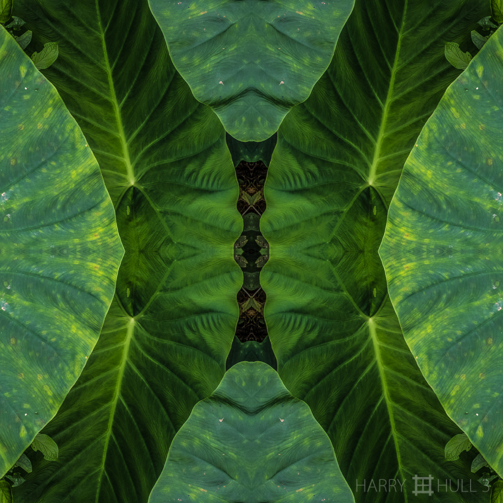 Leaf layers (mandala-hh3_161027_0632f-edit)