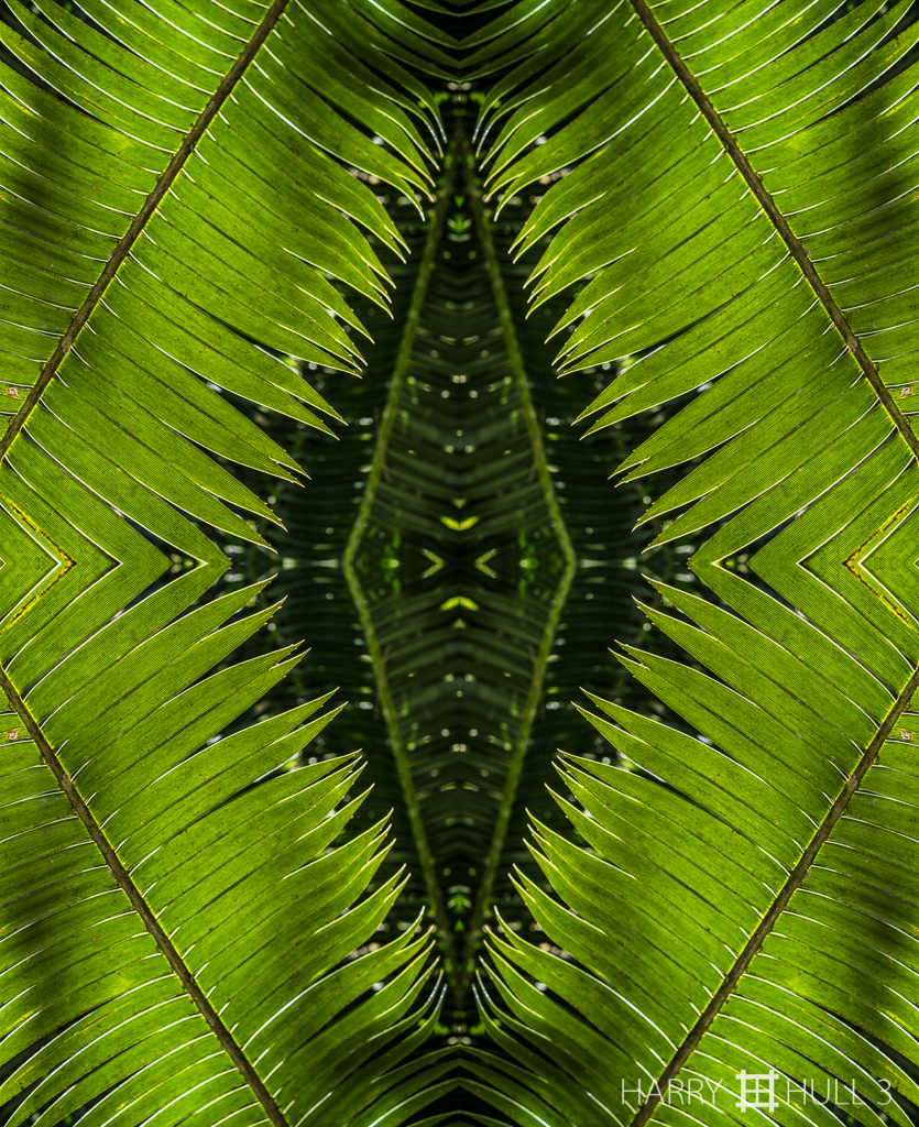 Frond memories (mandala-hh3_170113_1018f-edit)
