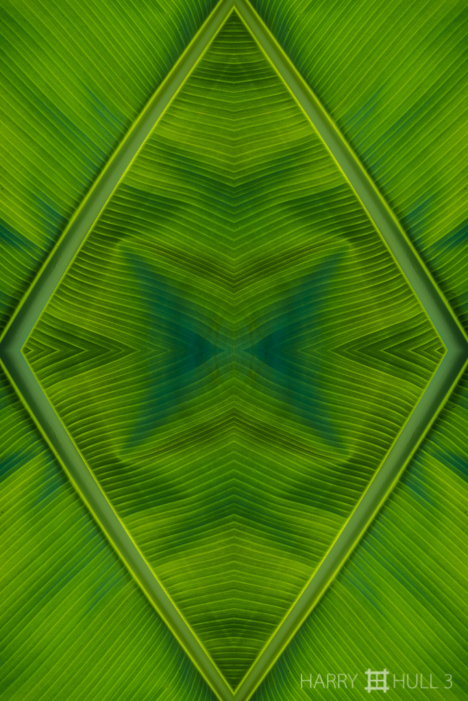 Green forces (mandala-hh3_170114_1040f-edit)
