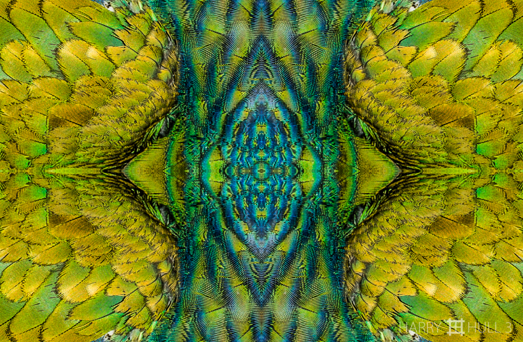 Feather forest (mandala-hh3_090124_3002-edit)