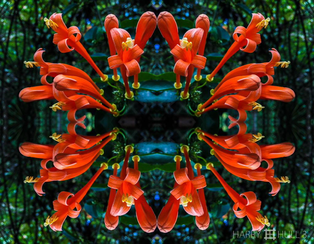 Flower flames (mandala-hh3_160126_3549i-edit)