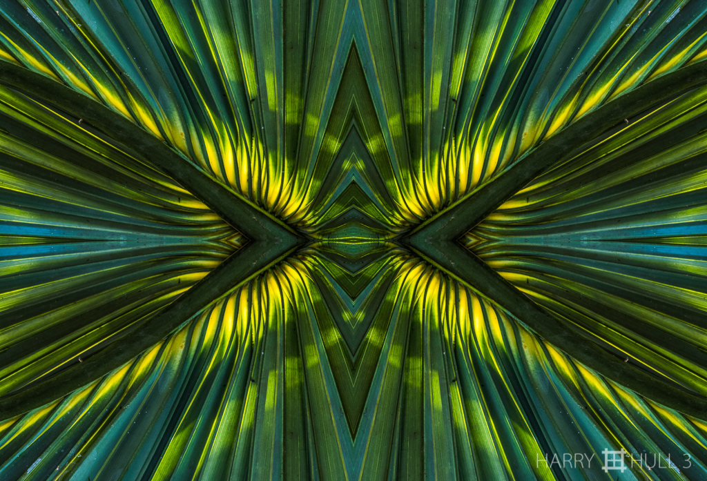 Eyes of the palm (mandala-hh3_170114_1032f-edit)