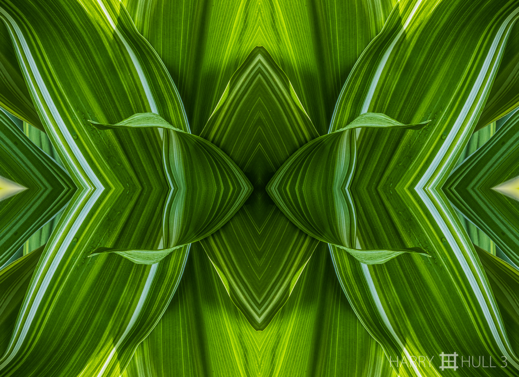 Living malachite (mandala-hh3_161214_0843f-edit)